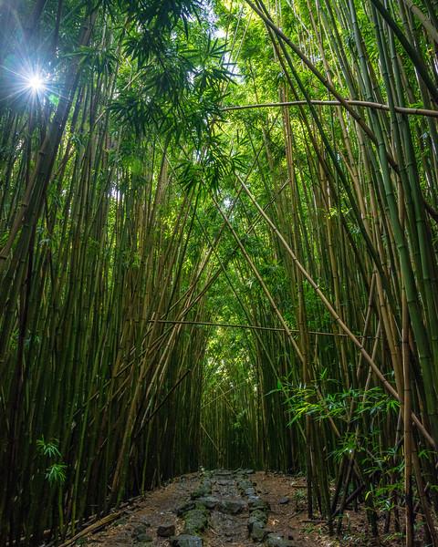 hawaii041.jpg
