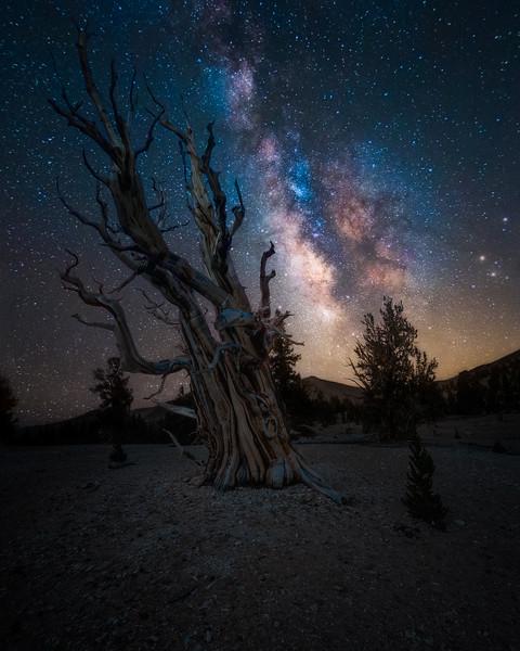 ancientbristleconepineforest.jpg