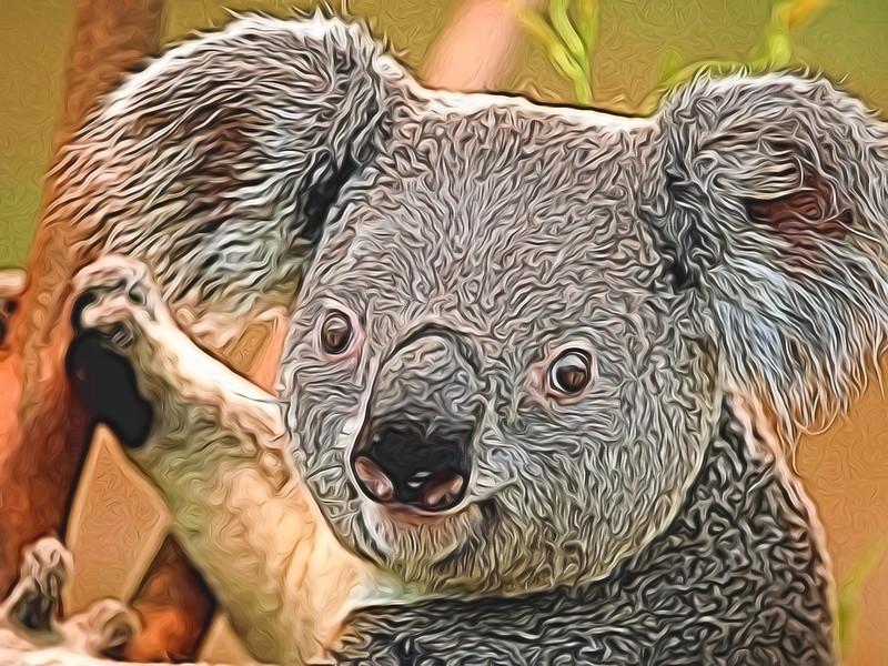 Topaz Koala 2.jpg