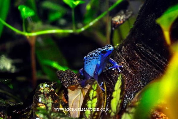 _DSC33512-Blue-Frog-Web.jpg