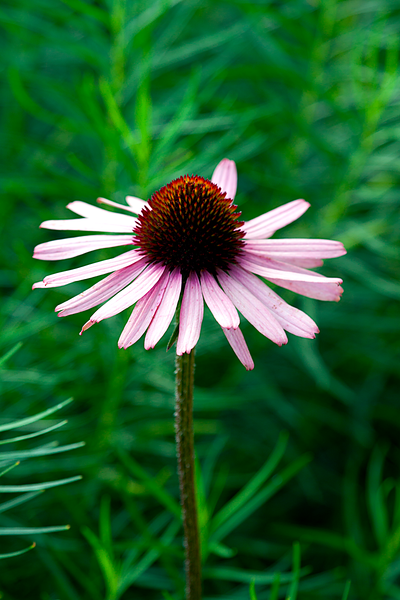 20120713_Flower_01.png