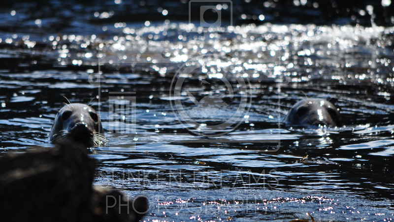 Lundy Island Edit.Still031.jpg