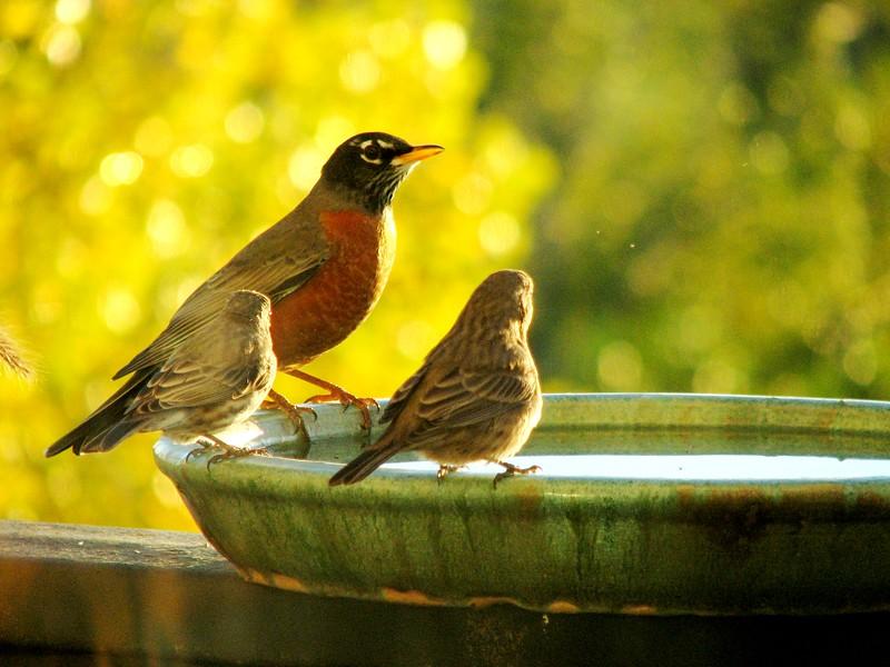 birds (178).jpg