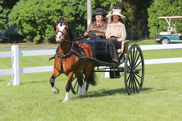 2014 CCF NOVICE HORSE/PONY DIVISION