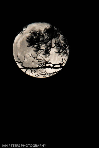 Branches of the Moon 4 x 6 300 dpi 2741.jpg