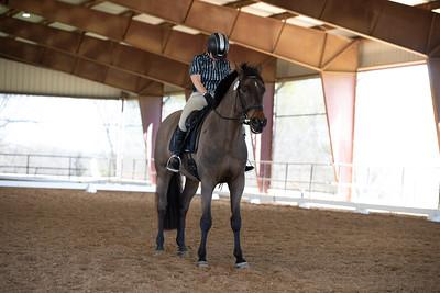 Horse 57