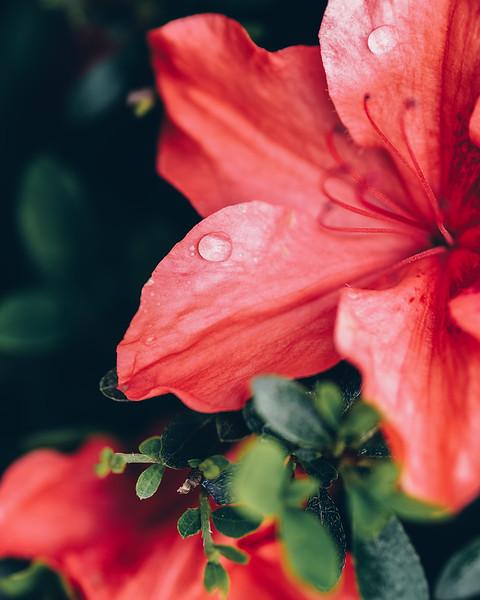 half-flower.jpg