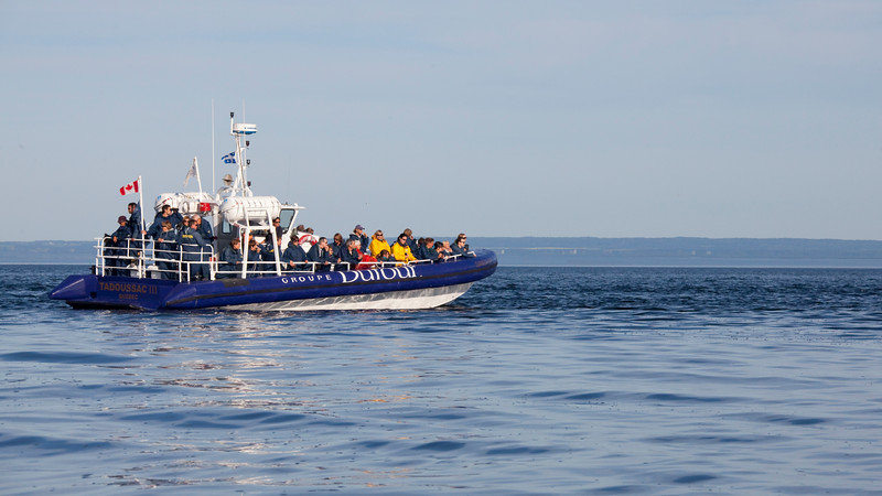 2011 quebec whale watching (49 of 80).jpg