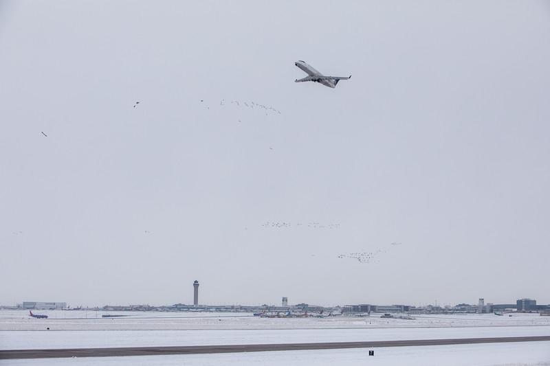 112420_airfield_united_wildlife_geese-007.jpg