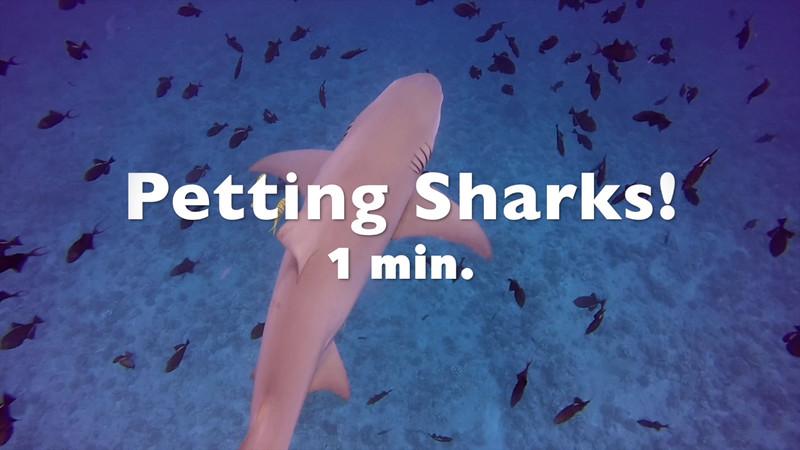 Petting sharks