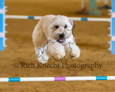 TBAC AKC Agility Trial September 7-8