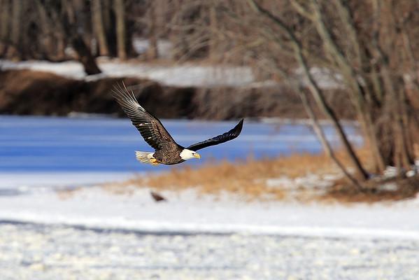 December 2013 Mississippi River Eagles