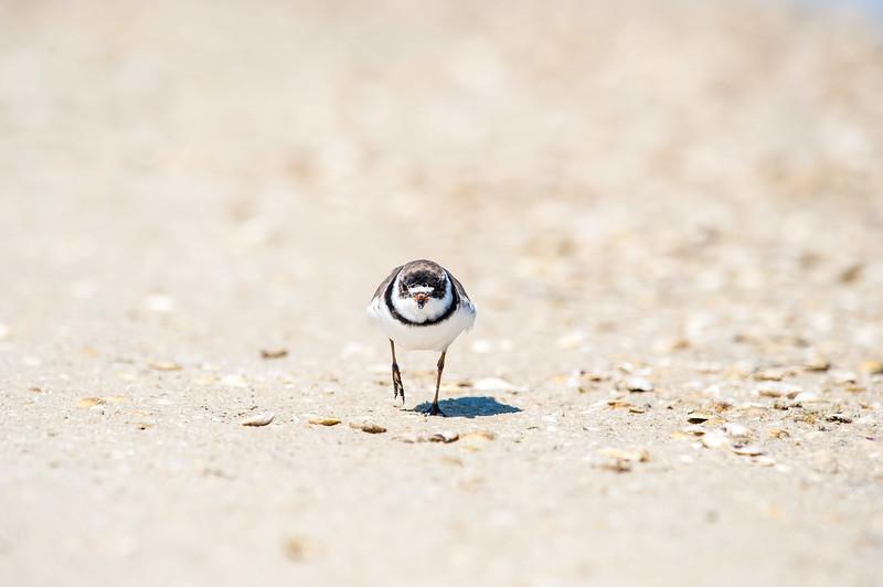 Fort Desoto Birds 2-30.jpg