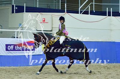 Class 7 Lrg Show Hunter Horse over 16hh
