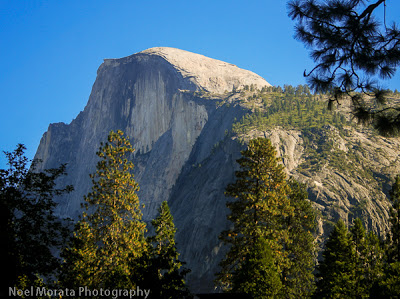 Half Dome emphasized by a bright blue sky and green trees. It's a strenuous Yosemite hiking trail.