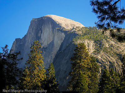Trees surrounding the stony prominence of Half Dome on the Four Mile Trail in Yosemite National Park.