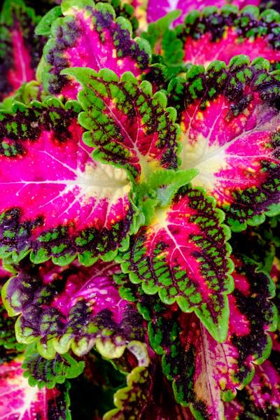 20191022 Smithsonian Botanical Garden 044.jpg