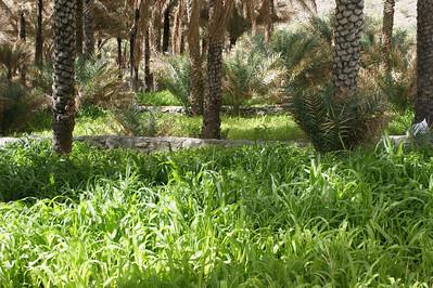 Oman April 2009