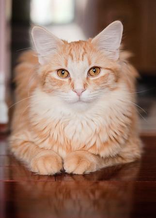 Chicago Pet Client Portrait Gallery