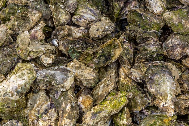 Austern - warten auf die Verarbeitung