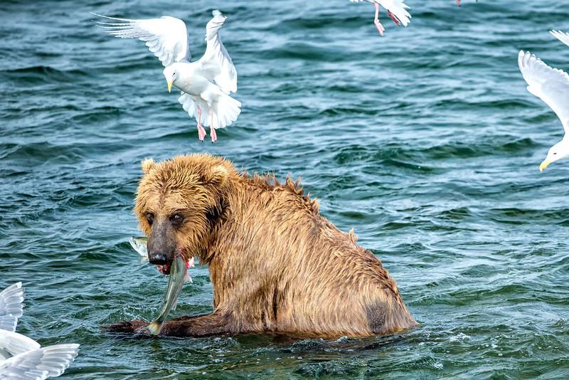 Alaska_2013_FH0T9627.jpg