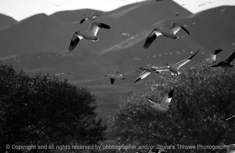 birds-bosque_del_apache_nm-01dec06-9849