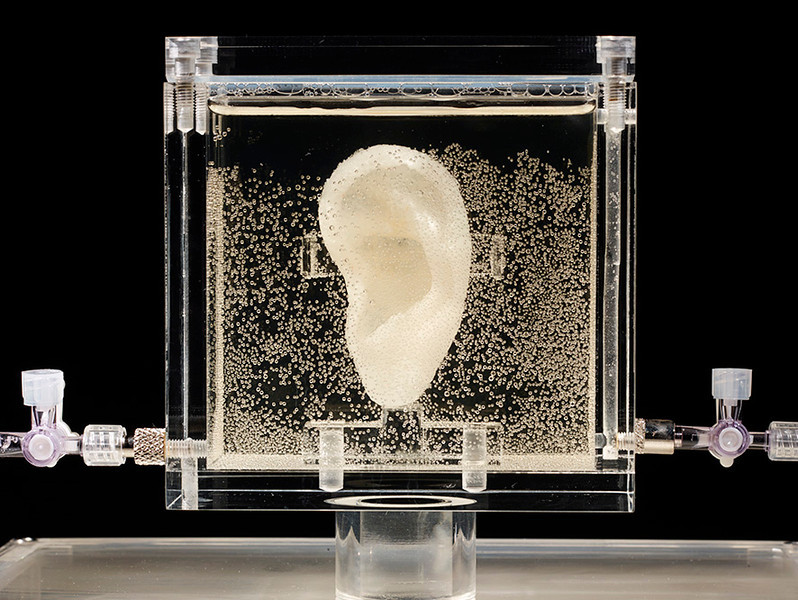 ". 3. (tie) VAN GOGH�S EAR <p>If you�re regrowing 19th century artists� body parts, you have WAY too much time on your hands. (unranked) <p><b><a href=\'http://www.twincities.com/breakingnews/ci_25888072/german-museum-shows-live-replica-van-goghs-ear\' target=""_blank\""> LINK </a></b> <p>   (AP Photo/Diemut Strebe.Sugababe)"