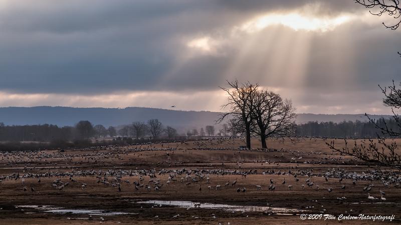 Himmelsk morgenlys / Heavenly morning light