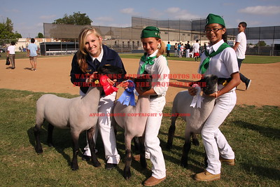 2010 LHVCF Sheep