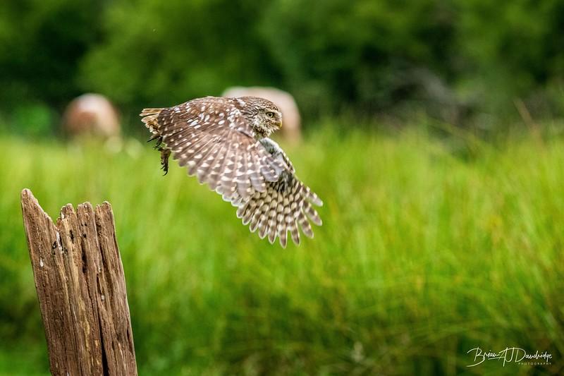 The Little Owl Shoot-6873.jpg
