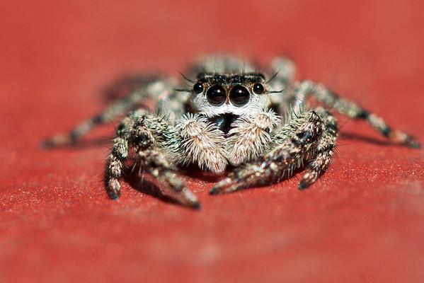 Not for Arachnaphobes