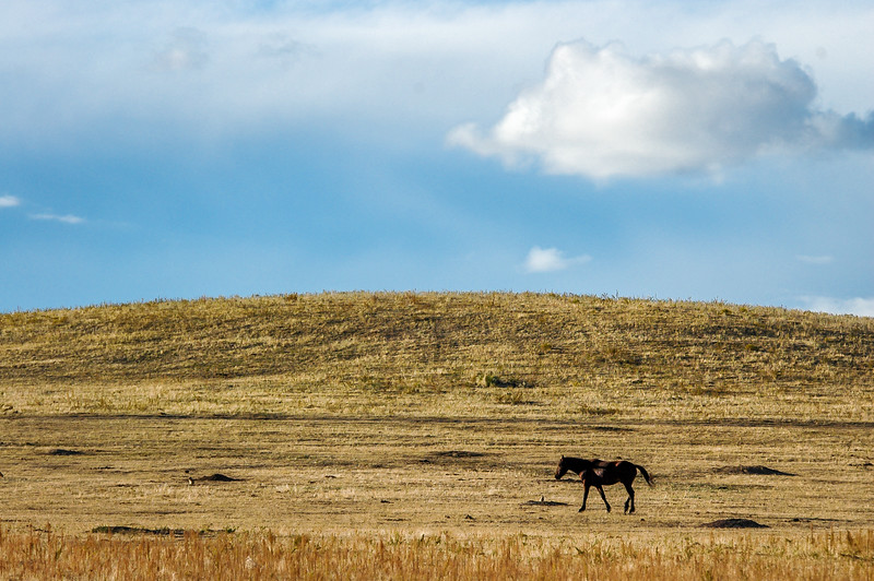 Wild Horse and Prairie Dog Town
