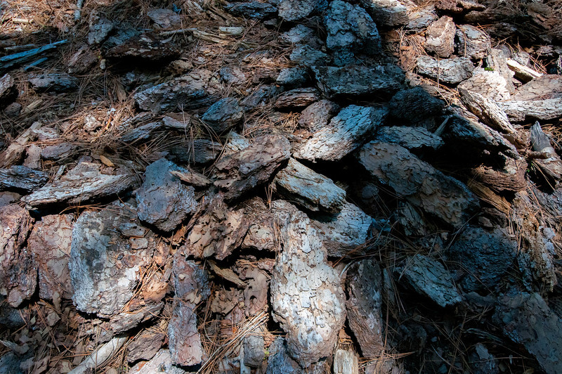 Wood chips on the floor of Yosemite National Park, California