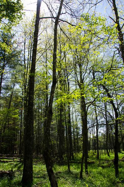 North Carolina - April 2012