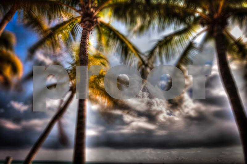 Palm Tree  (1 of 1) copy.jpg