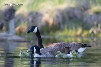 sm_family_portrait_M4D8109.jpg