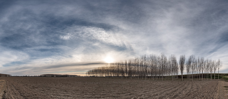 Poplars at Sunset - Marcaria, Mantova, Italy - March 2, 2019