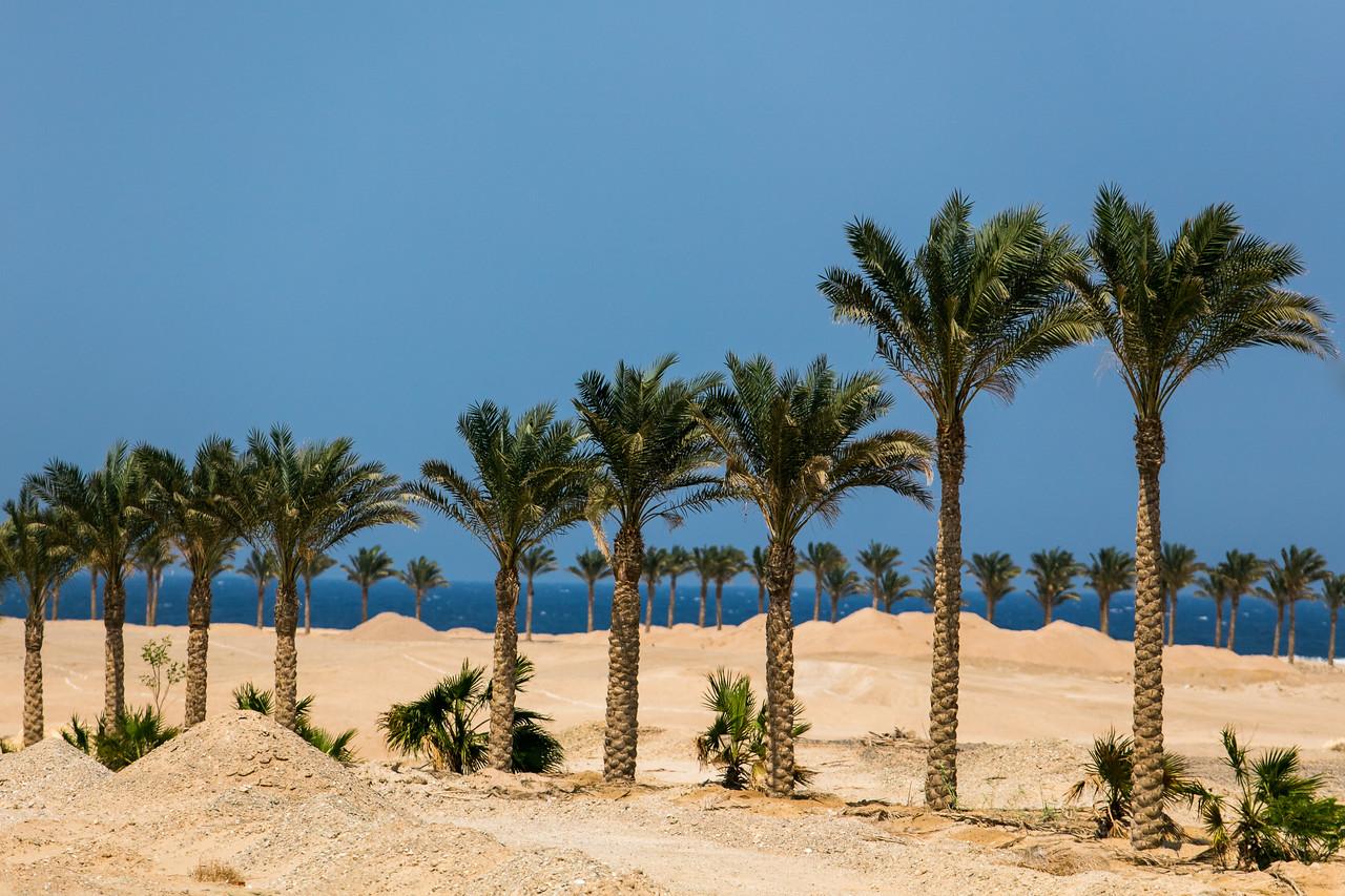 Egipt; Krajobraz; PrzezOknoAutobusu; Safari; pustynia; Wybrzeże Morza Czerwonego z palmami