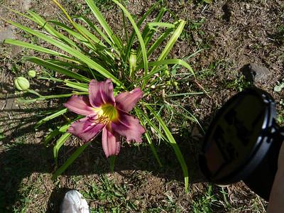 2011 July 30 Mtn Flowers