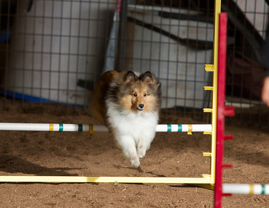 Advanced Agility Class - 21 Oct 2012