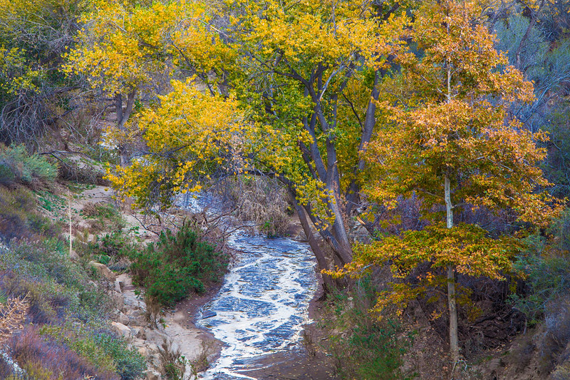 Sierra_Pelona_Mountains_Fall_Color_Southern_California_MG_7693.jpg