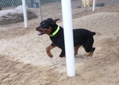 All Dogs Gym 9-16-2014
