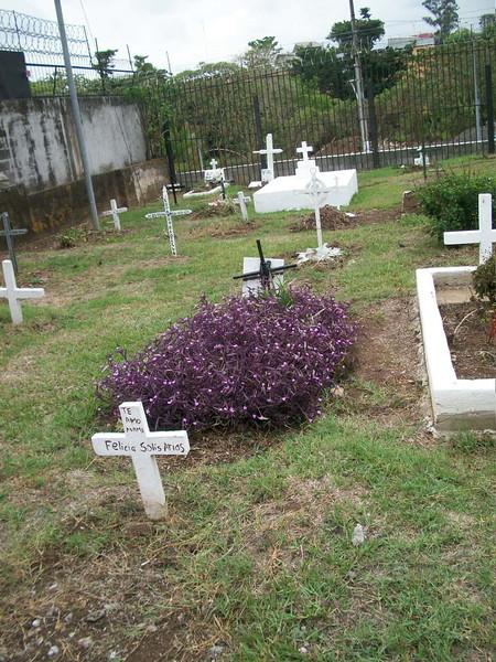 EscazuCentro_Cemetery2FlowersPurple.jpg