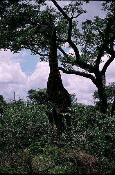 SAfricaZim1_023.jpg