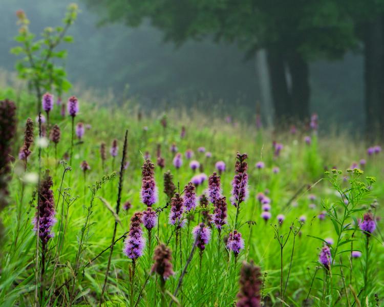 Misty meadow NY2 NO wm-.jpg