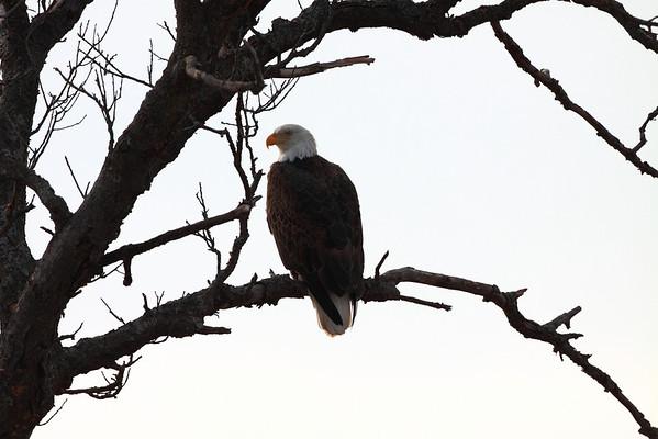 Eagle Tour 03042011