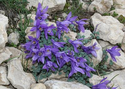 America, Rocky Mountains 2, (Idaho, Montana,Wyoming, Colorado)