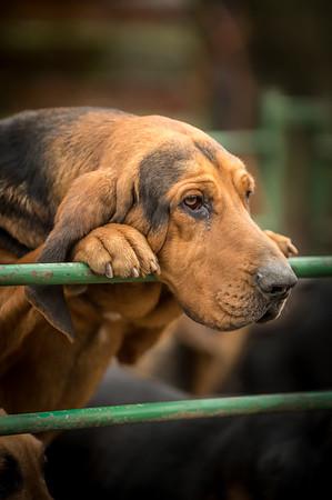 Burne Bloodhounds, 23rd February 2014