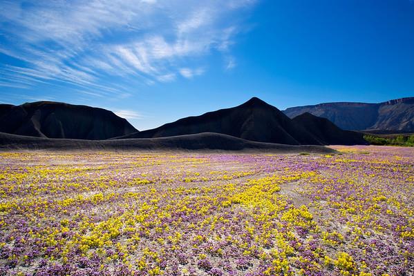 Dana Sohm Landscapes