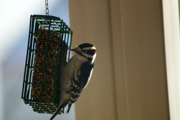 Deck visitor